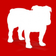 Download BullGuard Antivirus